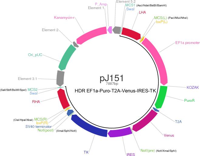 pJ151-HDR map